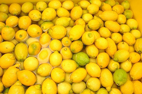 limones limoncello